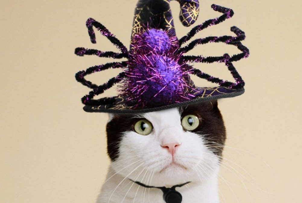 Is Your Cat Ready for Halloween?